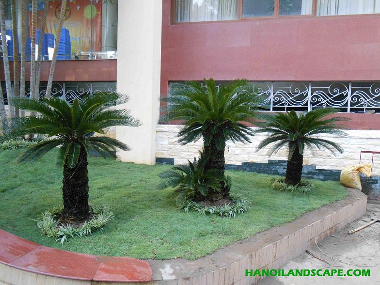 Sân vườn, Cây xanh – Bộ Y Tế