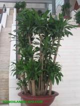 cây nội thất