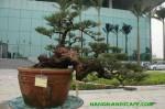 phi_lao_truc_hoanh_1600x1200 copy