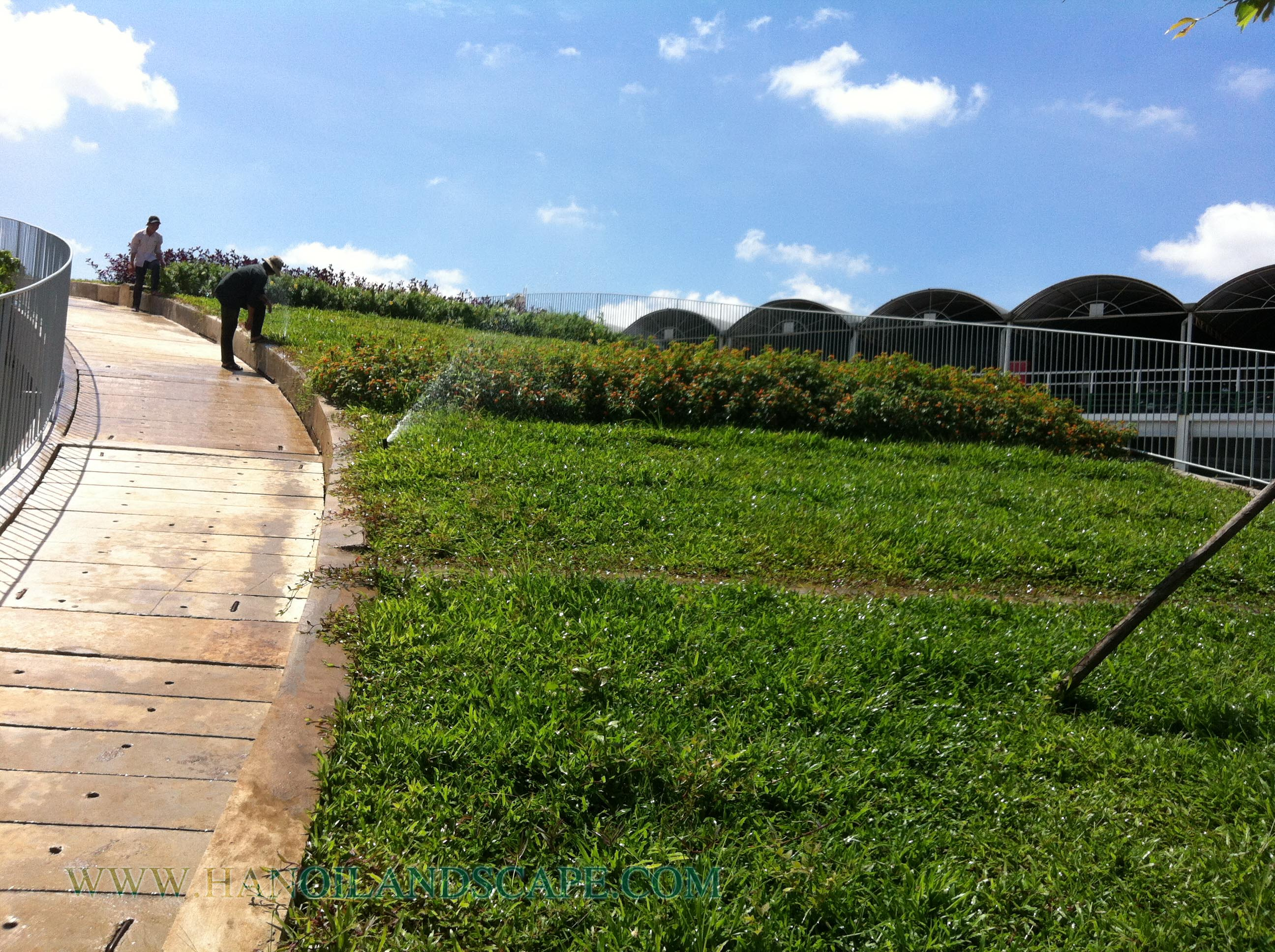 Tưới tự động cho vườn trên mái